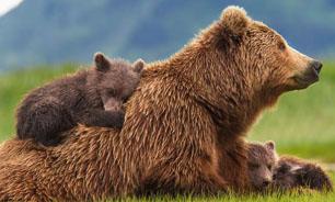 مستند جدید خرس ها