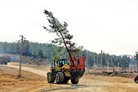 درختان دیگر نمیمیرند