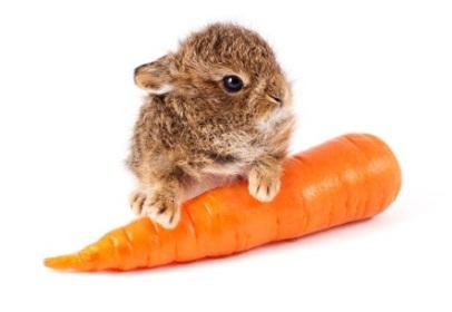 فروشگاه اینترنتی 5040 - مطالب مفید و کاربردی - بهداشت و سلامت - سبزیجات مناسب برای کاهش وزن - هویج