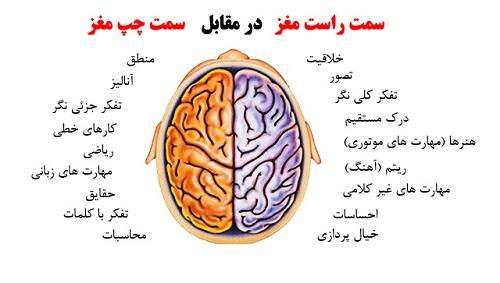 دانستنیهای کوتاه و جالب درباره مغز