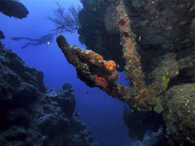 مرجانها