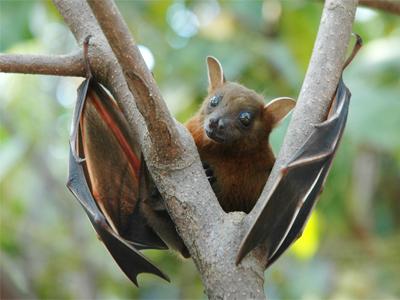 زیستگاه خفاشها